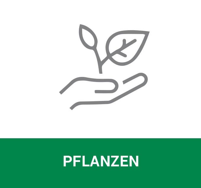 galabau-fischer-leistungen-pflanzen